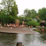 Пражскому зоопарку 80 лет