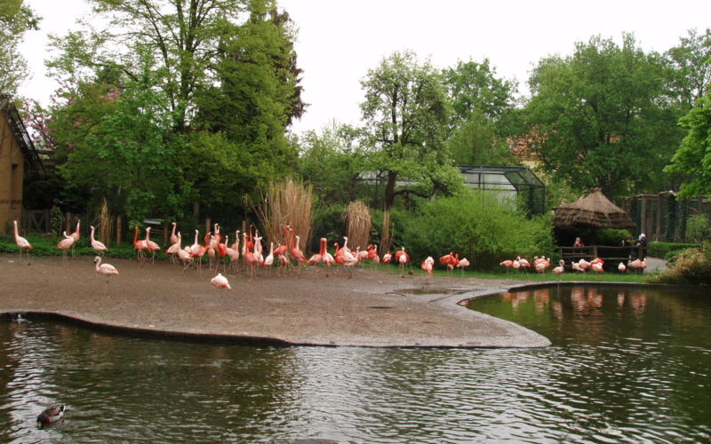 Фламинго в пражском зоопарке